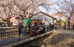 春薫る真清田神社と、小さな花街の花岡浴場へ